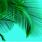 """Tropical Bliss - Aqua"" A3 Photographic Art Print"