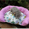 Pet bed for small pets ,