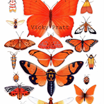 Orange Insect Collection