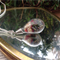 Botanical Necklace, Real Flower Necklace