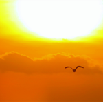 Greeting Gift Card - Photographic Print - Beach Sunset Sky Photo