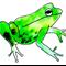 Pack of 5 frog postcards.