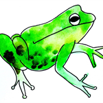 Pack of 5 frog postcards.