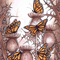 Monarch butterflies and thistles. Framed.