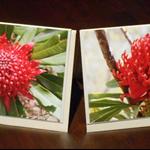 Red waratahs, 2-card pack