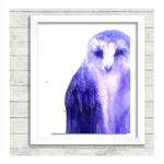 Henry Owl.