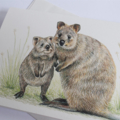 Quokka - Australian wildlife art greeting card. Pencil illustration. cute animal