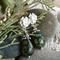"Victorian ""Dewy Grass"" Boho Chic Rustic Green Agate Crystal Beaded Stud Earrings"
