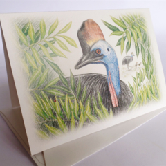 Southern Cassowary greeting card Australian wildlife art, large flightless bird