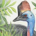 Southern Cassowary greeting card Australian wildlife art, large flightless bird