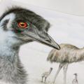 Emu greeting card Australian wildlife art, large flightless bird