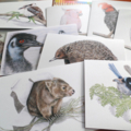 Australian King-Parrots greeting card, wildlife art,  Christmas colour, gum leaf
