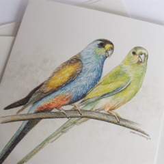 Golden-shouldered Parrots greeting card Australian wildlife endangered bird