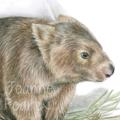 Wombat greeting card Australian wildlife art, with grasses, Common Wombat