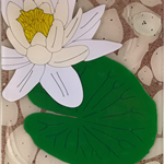 3D Clear Pond Lily