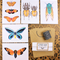 5 Insect cards with 5 kraft envelopes.