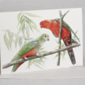 Australian King-Parrots greeting card, wildlife art,  Christmas colour, gum leaf