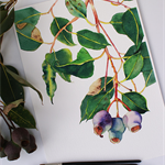 A4 Print Green & Purple Gumnuts - gum tree branch - Australian flora botanical