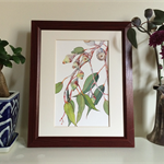 Australian native eucalyptus tree branch print from watercolour painting