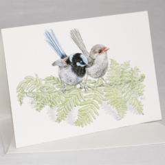 Superb Fairy-wren - wildlife art greeting card. Pencil illustration. Australian