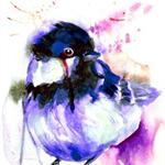 Little Bird. Little Bird.