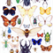 Insect Collection CARD