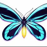 Queen Alexandra Birdwing butterfly CARD