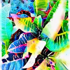 Watercolor Print - Crotons
