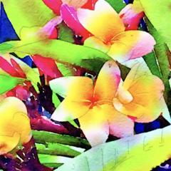 Watercolour Print - Yellow Frangipani