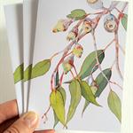 Set of 3 Silver Princess Eucalyptus cards & 3 envelopes