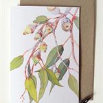 Silver Princess Eucalyptus card & envelope