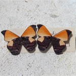 Brown and Orange Wooden Butterfly Button Earrings