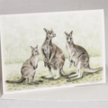 Kangaroo greeting card Australian wildlife art, family of Eastern Grey Kangaroos