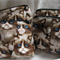 Cotton Grumpy Cat Purse