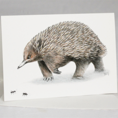 Echidna with ants greeting card Australian wildlife art, unique animal