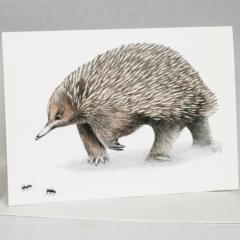 Echidna with ants greeting card Australian wildlife art, unique animal