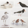 5 Beach-nesting Birds greeting cards inc DONATION to Birdlife Australia