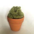 Brainy succulent