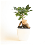 Little Bonsai Love Tree - Personalised Valentine's gift