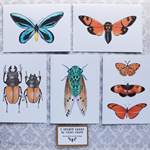 5 Insect cards with kraft envelopes.