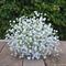 Bridesmaid bouquet of white, gypsophila, baby's breath bridal bouquet