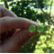 Greenery Pantone Inspired Fused Glass Mini Stud Earrings