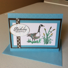 Male birthday cards. Goose/Wetlands birthday cards.