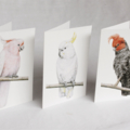Sulphur-crested Cockatoo greeting card Australian wildlife art, white bird