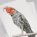 Gang-gang Cockatoo greeting card Australian wildlife art, grey pink bird