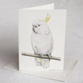 Sulphur-crested Cockatoo greeting card Australian wildlife art, white bird