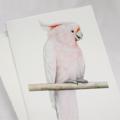 Major Mitchell's Cockatoo greeting card Australian wildlife art pretty pink bird
