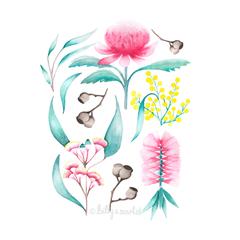 Australian Flora - A4 Art Print