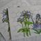 Handmade cards x 2 blank