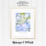 Hydrangea 2 A4 Print